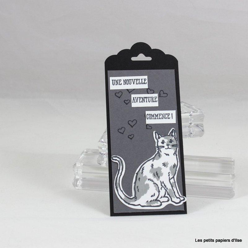 Photo du marque page au chat