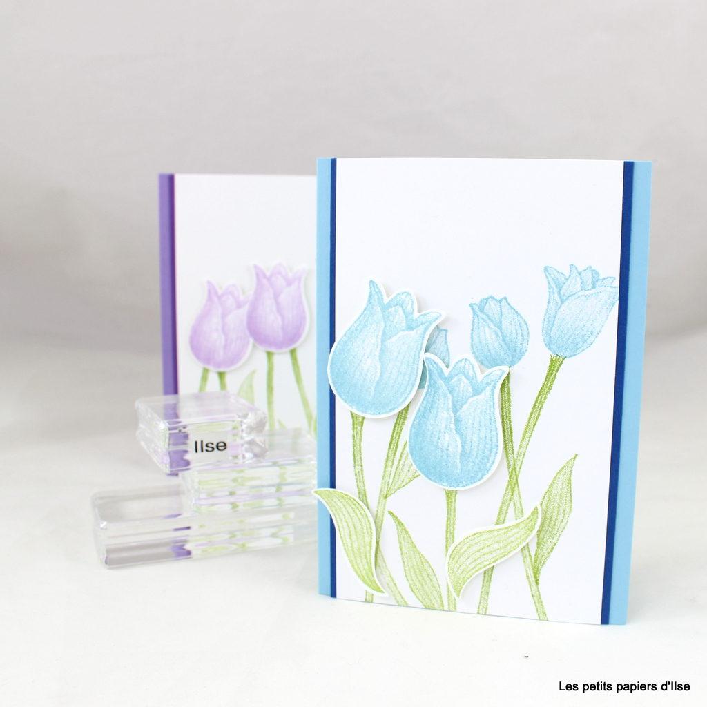 Photo des cartes aux tulipes