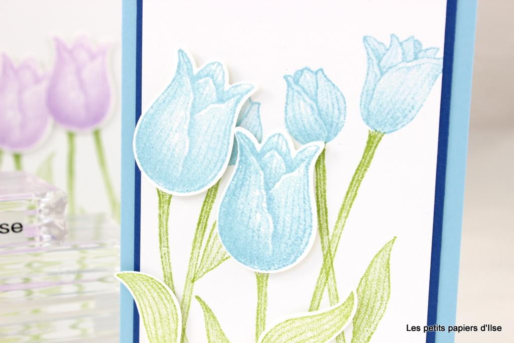 Détail des cartes aux tulipes