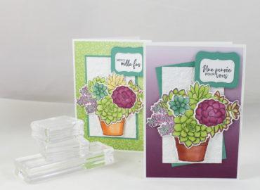 Photo de ma carte aux succulentes colorées
