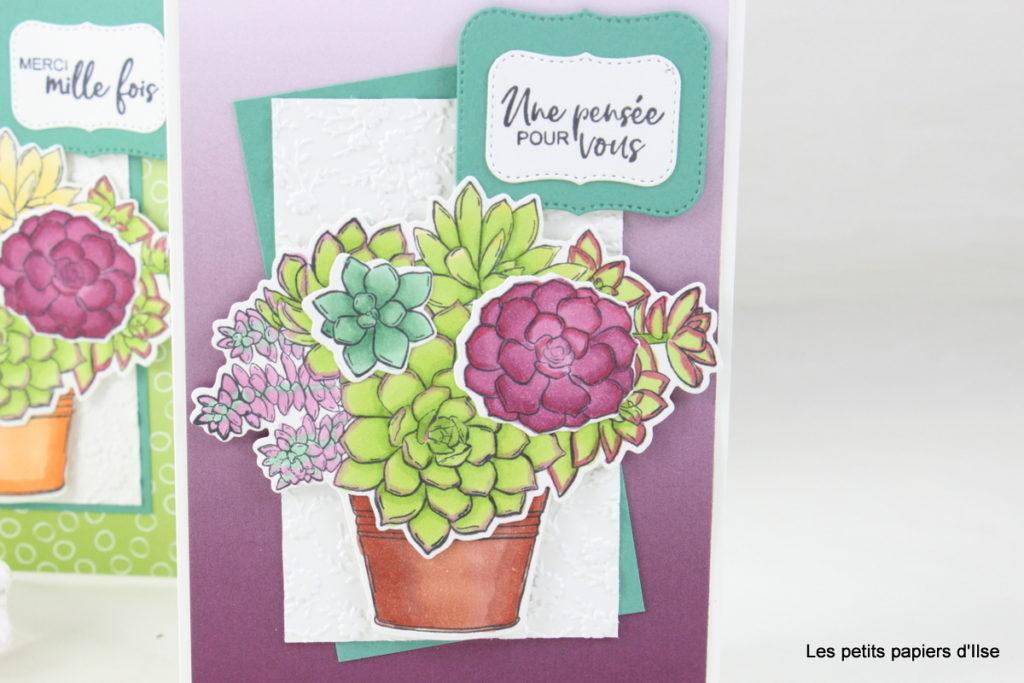 Détail de ma carte aux succulentes colorées